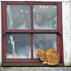 Macavity: The Mystery Cat (Dan Baillie) Tags: cats window glass cat outside scotland ginger waiting poem tabby macavity dumfriesandgalloway tselliot puddock danbaillie bailliephotographycouk bailliephotography wigtownshirephotographer dumfriesandgallowayphotography