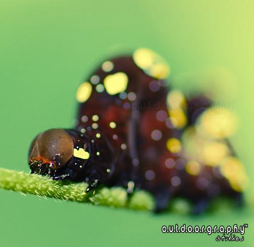 HBW Caterpillar :P