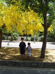 P6210080 (Sana Faisal) Tags: yellowtree isb f7 kohsaar