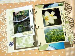 油桐花p3