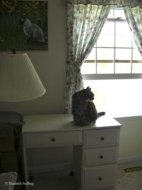Kitty on my desk