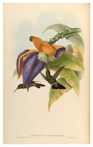 007-An introduction to the Trochilidae or family of humming-birds- Vol 2- 1861-John Gould
