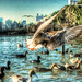 Ducks@SHINOBAZU pond