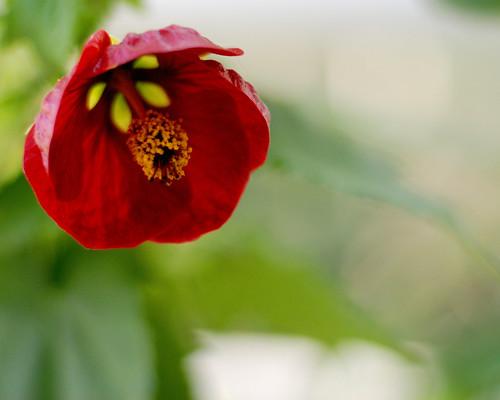 v botanical gardens 127