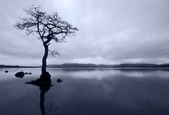 My Favourite Tree In the Whole World (Samantha Nicol Art Photography) Tags: uk blue sky snow mountains tree water silhouette bay scotland nikon hills explore samantha capped lochlomond gloaming nicol balmaha milarrochy sammikins1976 samanthanicolartphotography