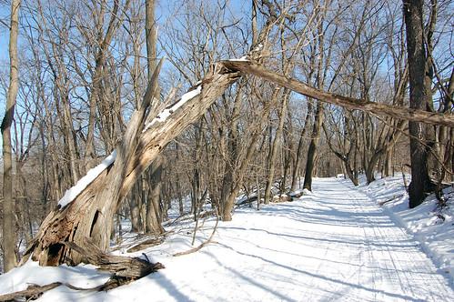 Macbride XC Ski Trail