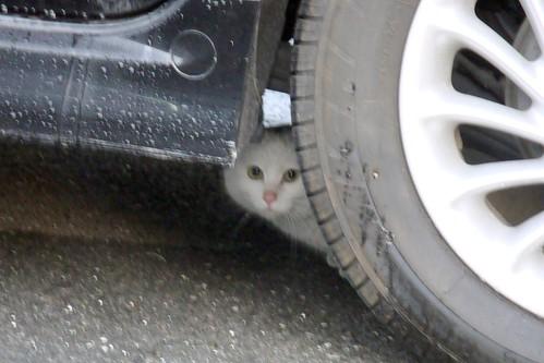 ポイント0第4の白猫登場