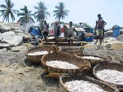 negombo fishers