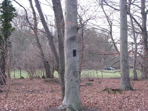 4-Árvore marcada para ser cortada