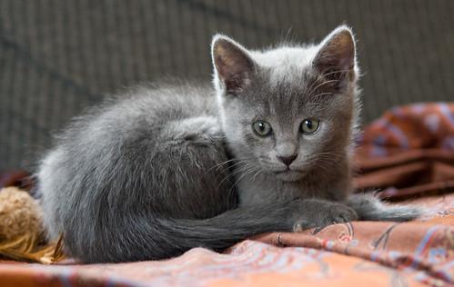 Kittens of Pegusha - Page 3 3300758202_c77ba014db
