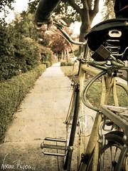 Marco's bike