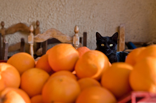 """an orange a day keeps the dog away!"""