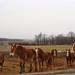 Roadside Mules