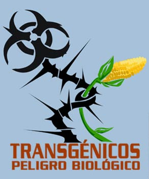 trangenicos peligro biologico