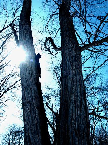 Go hug a tree