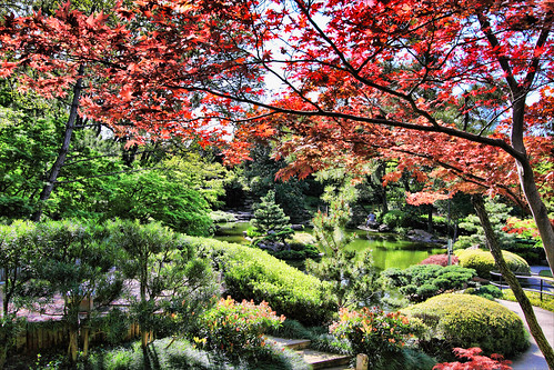 Japanese Gardens @ Fort Worth, TX
