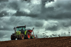Leaving the field (Dan Baillie) Tags: tractor field landscape scotland gulls farming agriculture galloway dumfriesandgalloway puddock wigtownshire danbaillie bailliephotographycouk bailliephotography wigtownshirephotographer dumfriesandgallowayphotography