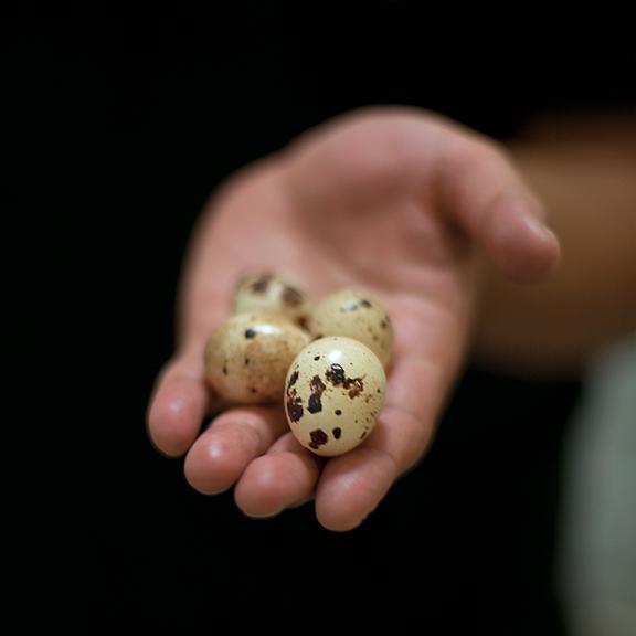 Porchestra Quail Eggs