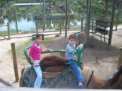 camel ride (domagtoy_family_fun) Tags: isabel roxy stryker lowryparkzoo