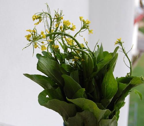 sawi flower