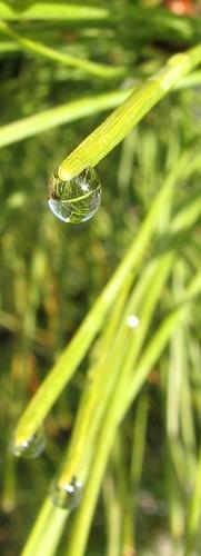 Refracting Drops