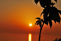 orange (www.facebook.com/ThaliaNouarouPhotography) Tags: sunset sea sky sun beach spring view hellas greece greekislands leafs westcoast thalia travelogue chios nikond60 anavatos elinta   avgonima nouarou  wwwthalianouarouwebscom wwwtraveloguemaggr