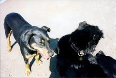 Bella and Dino (gigarella) Tags: dogs bakerbeach