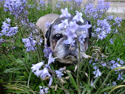 Roscoe in Flowers