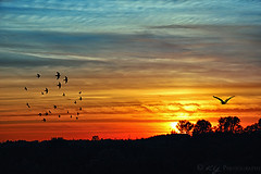 Flying to Eternity (KY-Photography) Tags: ca blue trees sunset red sky orange sun ontario canada nature birds silhouette yellow night clouds photoshop landscape evening twilight dusk ky wildlife guelph brush nikkor khalid allrightsreserved kal eternal gloaming guelphlake explored capturenx nikond80 18135mmf3556g kyphotography