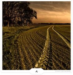 Country Tracks (Gert van Duinen) Tags: trees sky landscape bravo track path digitalart trails textures trail pasture land landschaft landschap dutchartist flickrsbest landschaftsaufnahme cresk theunforgettablepictures gertvanduinen lesamisdupetitprince artistictreasurechest
