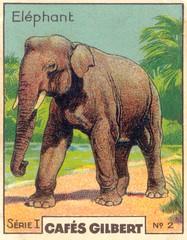 gilb elephant