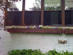 Window boxes right after planting out.