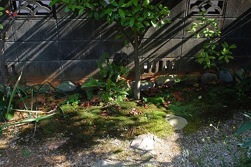 庭の植物と射光