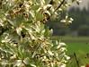 Georgeson Botanical Garden-9