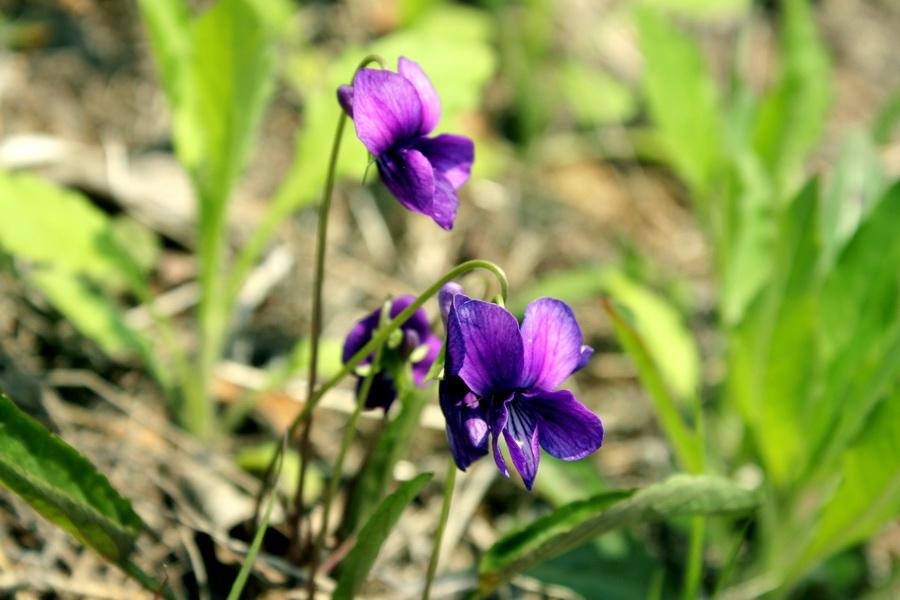 Flower (5)