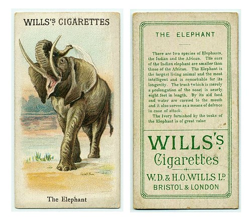 014-The Elephant. (ca. 1893-1902)