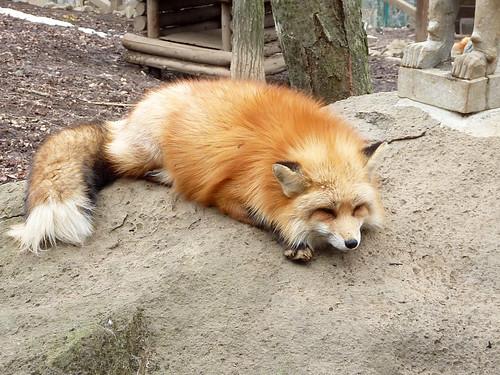 fox11