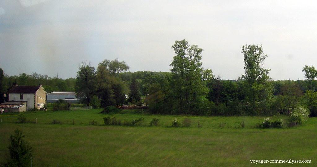 Paysages verts et de forêts