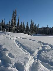Sun Peaks 2008 (Counteract.) Tags: winter snow skiresort snowshoeing 2008 tubing snowshoes sunpeaks snowtrails