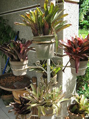 PLANTS IN POTS (PINOY PHOTOGRAPHER) Tags: world trip travel asia tour philippines filipino bicol pinoy pilipinas iriga camsur