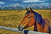 Pastoral Pasture Revisited (Jeff Clow) Tags: horse mountains searchthebest meadow pasture equine grandtetonnationalpark 1xp jacksonholewyoming anawesomeshot dynamicphotohdrsoftware ©jeffrclow