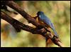 xDSC_2206 copy (sajeshjose) Tags: camp wildlife bangalore sash bannerghatta sajesh bennerghatta ireboot
