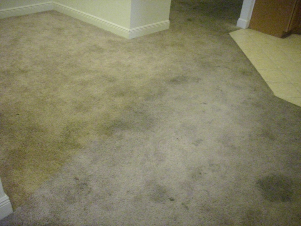 Carpet cleaning in Gainesville Fl- Before photos