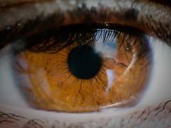 Beautiful in my eyes (Candice BostYn PhotographY) Tags: eye eyes oeil yeux reflet vision sight visual reflexions vue regard voir cils colourartaward macrolife flickrlovers