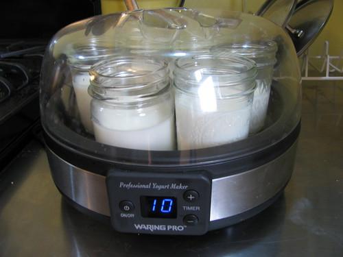 yogurt incubating in maker
