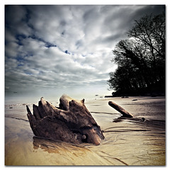 Bembridge. Submerged - Found Sculpture (planet of the apes style) (s0ulsurfing) Tags: ocean winter sea sky sculpture cloud seascape reflection tree beach nature water lines clouds composition square landscape found island coast interesting sand skies quiet peace natural patterns wide shingle perspective shoreline wideangle pebbles calm explore coastal filter shore planetoftheapes windswept vectis isleofwight solent stump vista coastline february bec grad desolate landschaft isle 2009 diffused squared wight mellow desolation bembridge altocumulus 10mm sigma1020 nd4 s0ulsurfing aplusphoto infinestyle vertorama eastwight bembridgelifeboat mondocafeclub bembridgebay