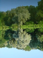 This way's better... (Weaver_23ph) Tags: trees reflection green nature water digital reversed szczecin