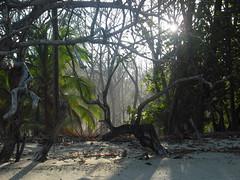 Light and rainforest
