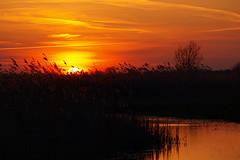 Sunset in the Oostvaardersplassen (ingo.ronner) Tags: sunset orange holland reed silhouette nationalpark colours polder flevoland oostvaarderplassen e420