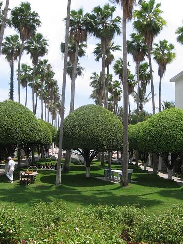 Delano garden area